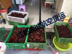 成都至西藏昌都小龙虾发运